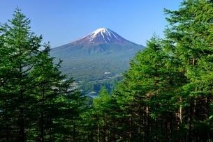 新道峠より望む木々と富士山の写真素材 [FYI01803864]