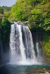 静岡県 新緑の音止の滝の写真素材 [FYI01803889]