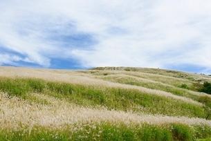 山梨県 明神山のススキ原の写真素材 [FYI01803913]