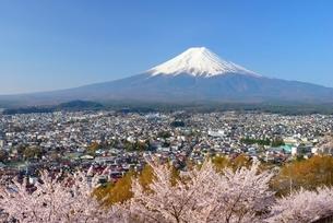 山梨県 桜咲く新倉山浅間公園より望む富士山の写真素材 [FYI01803920]