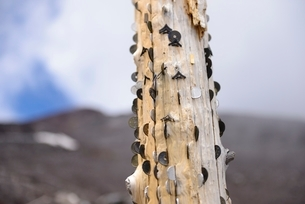 富士山登山道にある小銭の挟まった鳥居の脚の写真素材 [FYI01803971]