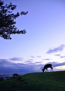 若草山の鹿の写真素材 [FYI01804028]
