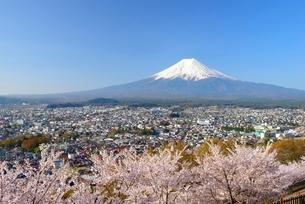 山梨県 桜咲く新倉山浅間公園より望む富士山の写真素材 [FYI01804127]