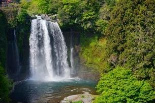静岡県 新緑の音止の滝の写真素材 [FYI01804145]