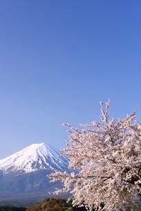 河口湖湖畔の桜と富士山の写真素材 [FYI01804157]
