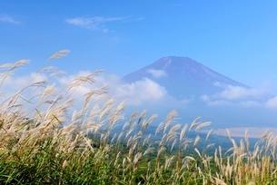 山梨県 ススキと富士山の写真素材 [FYI01804233]