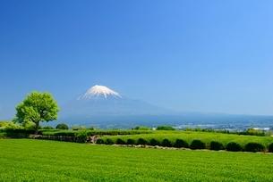 静岡県 富士市岩本山の茶畑と富士山の写真素材 [FYI01804293]