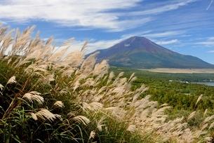 ススキと秋の富士山の写真素材 [FYI01804354]