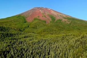 山梨県 中腹より見上げる夏の富士山の写真素材 [FYI01804405]