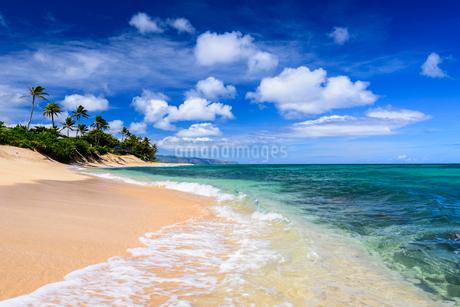 ハワイ オアフ島 サンセットビーチの写真素材 [FYI01804460]