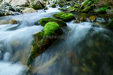 照葉峡の写真素材 [FYI01804527]