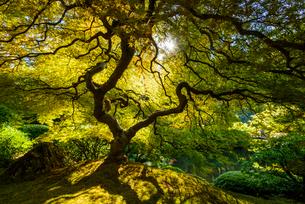日本庭園の写真素材 [FYI01804677]