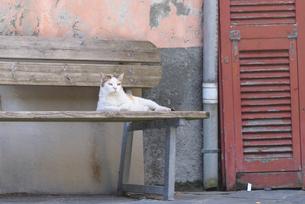 猫の写真素材 [FYI01804701]