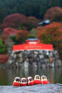 紅葉の勝尾寺 勝ちダルマの写真素材 [FYI01805242]