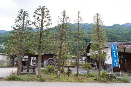 奈良井駅前の木曽五木の写真素材 [FYI01805276]