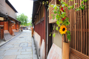 ひまわりの花筒が飾られた祇園白川の町並みの写真素材 [FYI01805539]