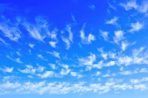 青空一面に広がる秋の雲の写真素材 [FYI01805547]