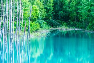 青い池の写真素材 [FYI01805774]