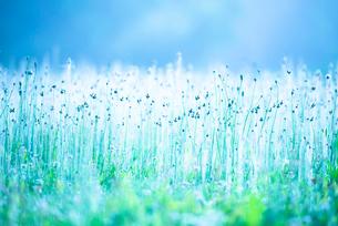 透明に輝く草花の写真素材 [FYI01805777]