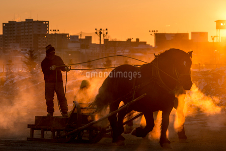 ばんえい競馬の朝調教の写真素材 [FYI01805810]