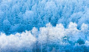 霧氷の写真素材 [FYI01805852]