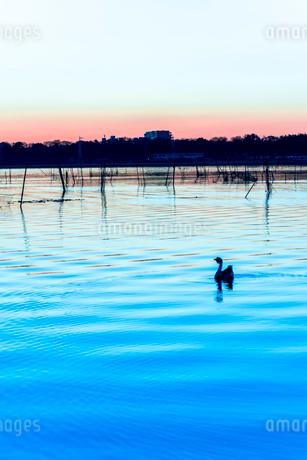 印旛沼の夜明けの写真素材 [FYI01805870]