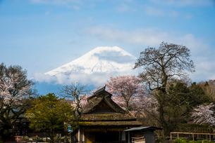 忍野八海 桜と富士山の写真素材 [FYI01805873]
