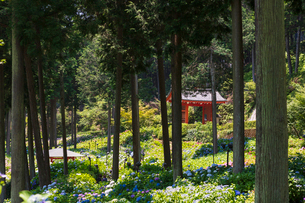 三室戸寺の山門の写真素材 [FYI01805889]