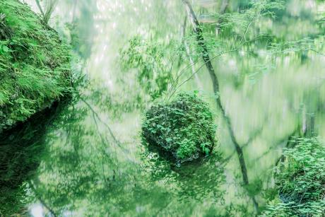 新緑の写真素材 [FYI01805896]