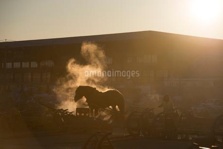 ばんえい競馬の朝調教の写真素材 [FYI01805925]