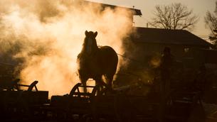 ばんえい競馬の朝調教の写真素材 [FYI01805968]