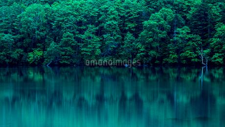 木々の水面への映り込みの写真素材 [FYI01805982]