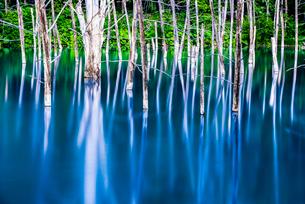 青い池の写真素材 [FYI01806014]