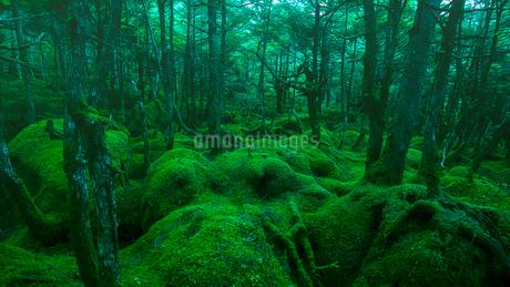幻想的な苔の森の写真素材 [FYI01806020]