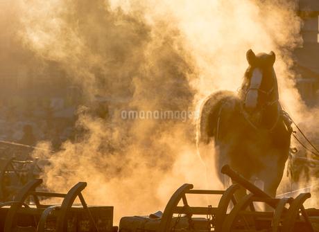ばんえい競馬の朝調教の写真素材 [FYI01806043]