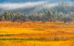 草紅葉の湿原の写真素材 [FYI01806061]
