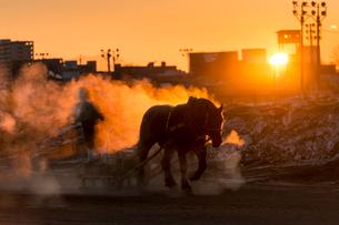 ばんえい競馬の朝調教の写真素材 [FYI01806065]