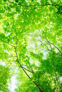 新緑の写真素材 [FYI01806070]