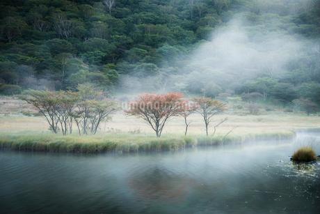 覚満淵での朝霧と紅葉の写真素材 [FYI01806101]