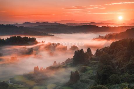 夜明けの棚田と雲海の写真素材 [FYI01806124]
