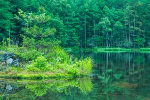 御射鹿池 新緑と映り込みの写真素材 [FYI01806148]