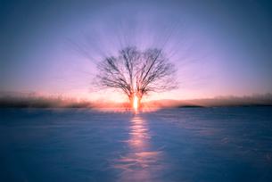 夕日とハルニレの木の写真素材 [FYI01806150]