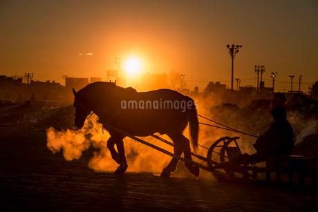 ばんえい競馬の朝調教の写真素材 [FYI01806196]