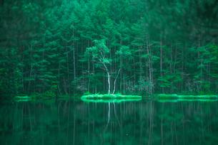 御射鹿池 新緑と映り込みの写真素材 [FYI01806215]