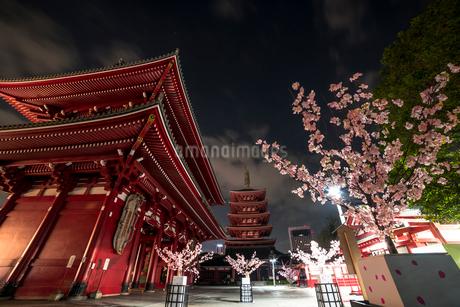 浅草寺 桜の写真素材 [FYI01806230]