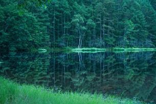御射鹿池 新緑と映り込みの写真素材 [FYI01806238]