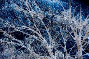 霧氷の写真素材 [FYI01806255]