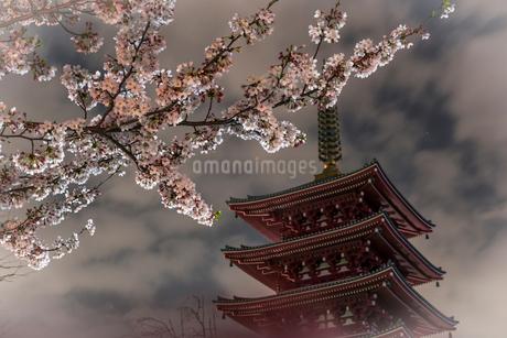 浅草寺 五重塔と桜の写真素材 [FYI01806269]