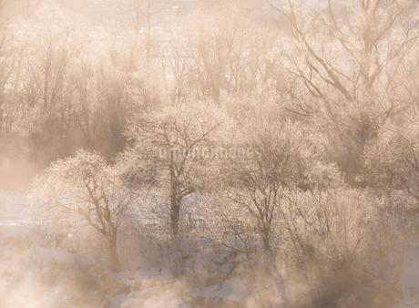 霧氷と川霧の写真素材 [FYI01806316]