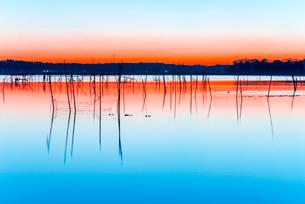 印旛沼の夜明けの写真素材 [FYI01806355]